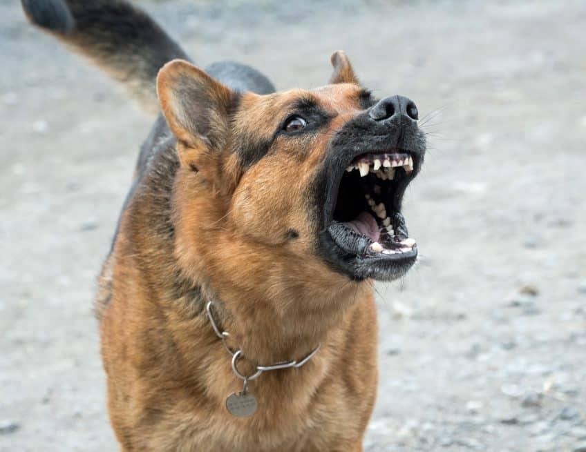 Dog Bite Lawyer Lakeland FL